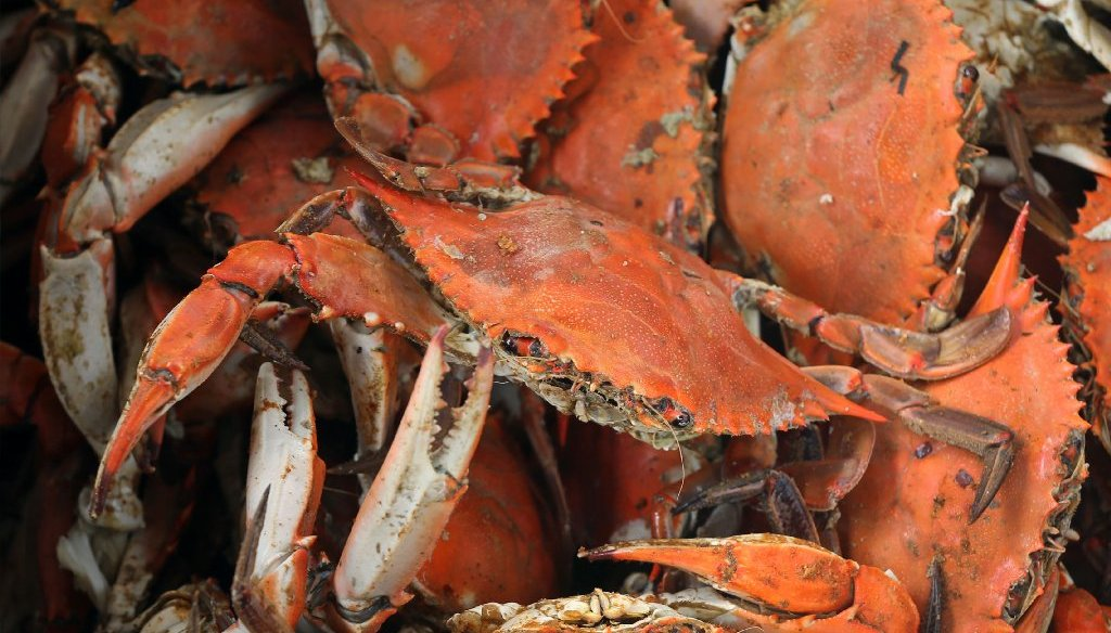 If it's a blue crab, it was probably born in Virginia. (Photo by the Richmond Times-Dispatch)