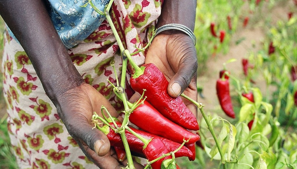 A farmer shows off her crop of paprika peppers in Mang'alali village, Iranga region. (Photo USAID)