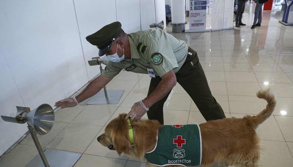 A police handler and his COVID-19 sniffer dog give a demonstration at the Arturo Merino Benítez International Airport in Santiago, Chile, Dec. 21, 2020. (AP)