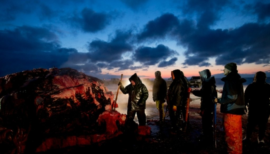 Illuminated by fading sunlight and aided by the beams of truck headlamps, Fredrick Brower, left, helps cut up a bowhead whale caught by Inupiaq subsistence hunters in Barrow, Alaska, on Oct. 7, 2014.