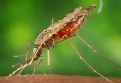 Malaria: A PolitiFact sheet
