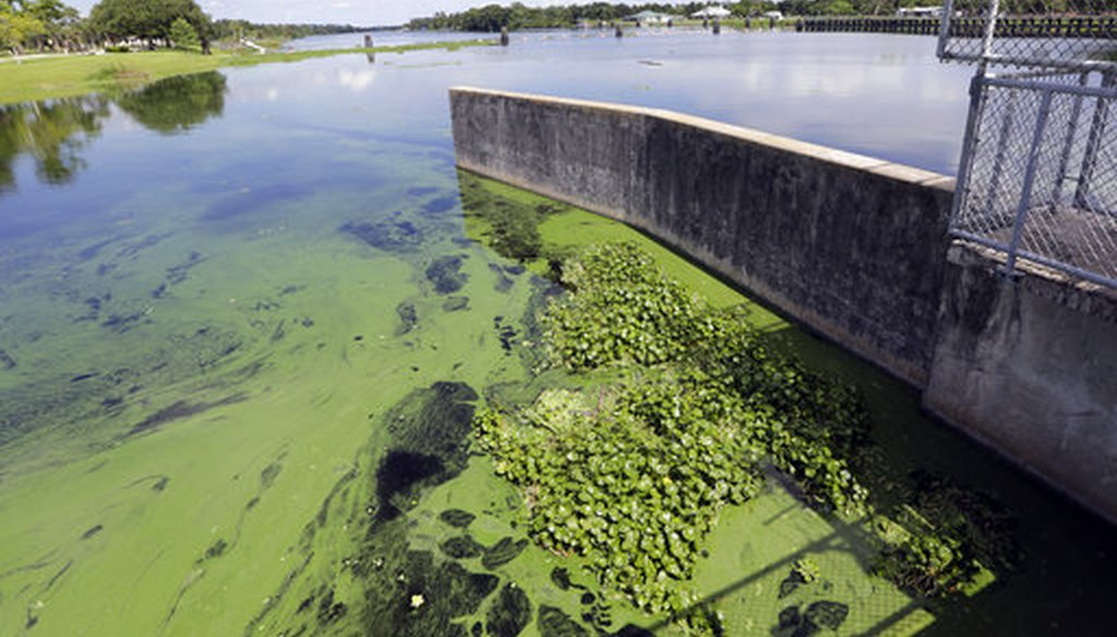 An algae bloom is on the Caloosahatchee River at the W.P. Franklin Lock and Dam, Thursday, July 12, 2018, in Alva, Florida. (APP