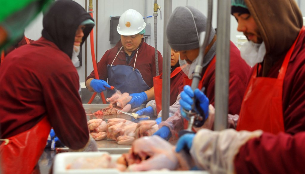 Poultry inspector Hamilton Cook inspects chickens at the White Oak Pastures processing plant in Bluffton, Ga. The Physicians Committee for Responsible Medicine wants better poultry inspection to prevent fecal contamination. Photo by Brant Sanderlin/AJC