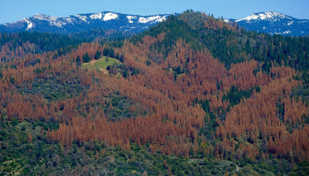 More than 100 million trees have died in California's forests due to drought and bark beetle infestations since 2010. Photo / U.S. Forest Service