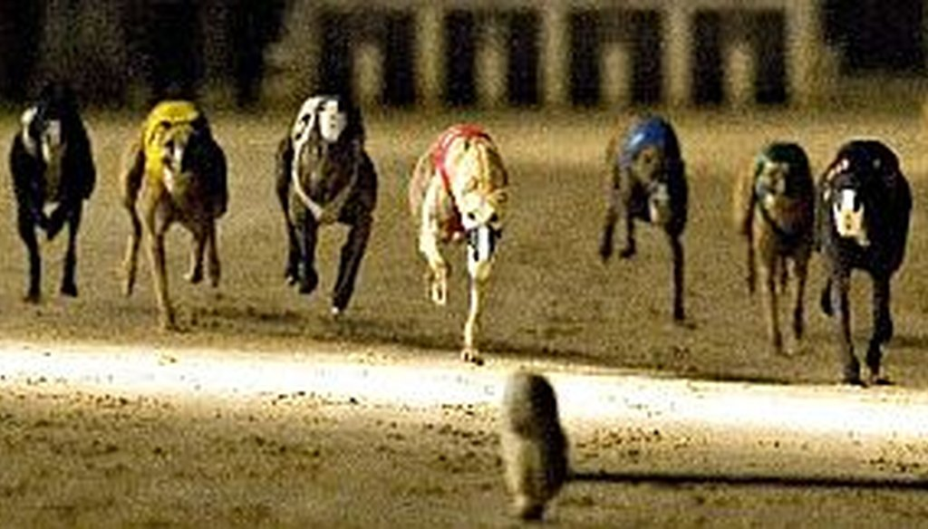 Does Florida have more dog-racing tracks than any other state?