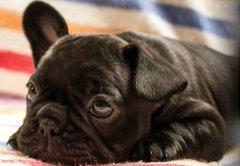 Dog in overhead bin? Feds let airlines set pet travel policies