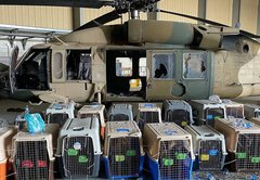 Crated dogs in Kabul airport photo didn't belong to US military. What's going on?