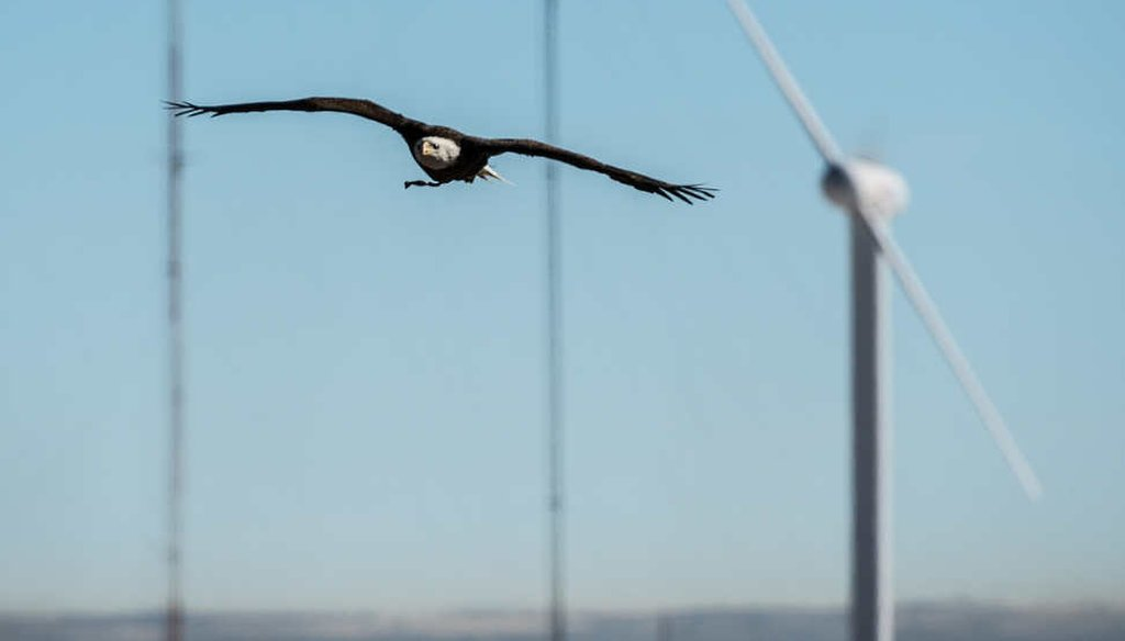 Researchers use trained eagles to develop radar and other methods to reduce bird deaths from wind turbines. (NREL)