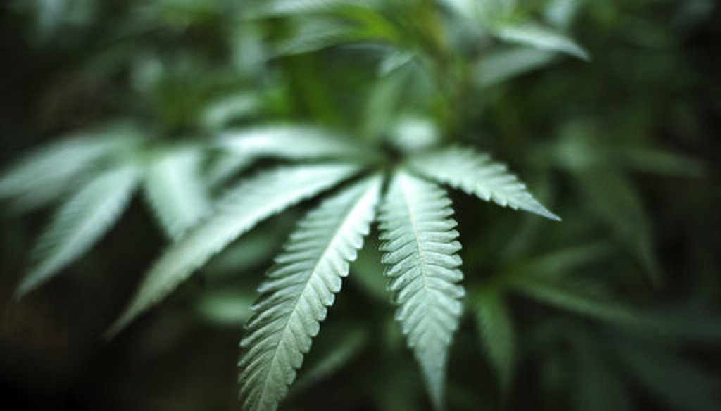 Marijuana grows at an indoor cannabis farm in Gardena, Calif. (AP/Vogel)