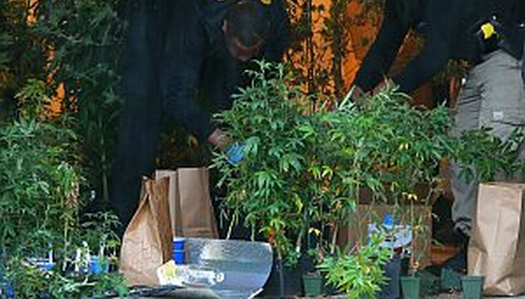 Atlanta police remove more than 250 marijuana plants valued at over a half million dollars after busting a grow operation at a home in the Glen subdivision earlier this month. Several advocacy groups are pushing to reform Georgia's marijuana laws.