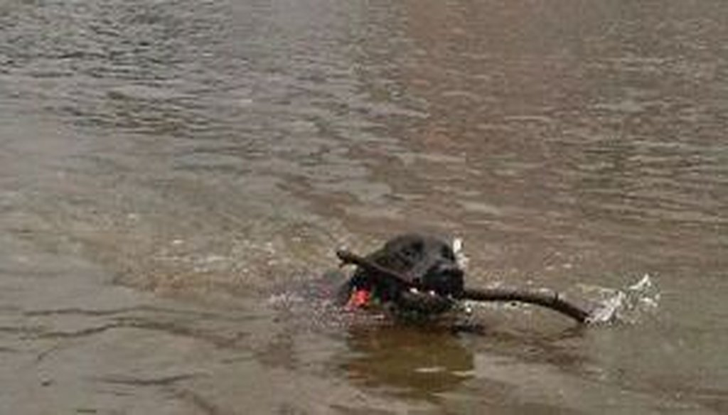 A photo of a dog swimming in Lady Bird Lake that Perry posted on Twitter