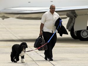 Bo, the White House dog, accompanied the Obamas on vacation -- but not on his own jet