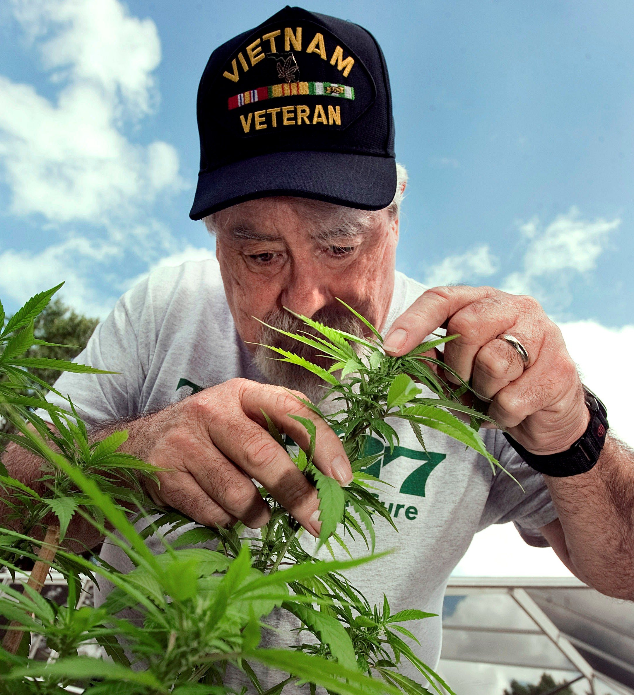 Robert Jordan, 65, of Parrish, Fla., grows a small amount of medical marijuana for his wife, Cathy Jordan, 63, who was diagnosed with 27 years ago with ALS, also known as Lou Gehrig's disease. CHERIE DIEZ | Times